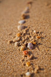 Trail of shells Stock Photography