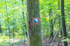 Trail sign painted on tree bark in summertime forest. Royalty Free Stock Photography