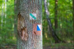 Trail sign painted on tree bark in summertime forest. Royalty Free Stock Photo