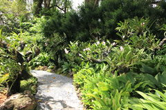 Trail in Singapore Botanic Gardens. Stock Photos