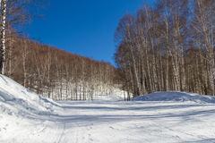 Trail for skiers through birch grove Stock Photo