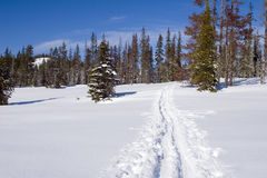 Trail in the Snow Stock Photo