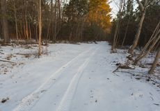 Trail after the snow bomb cyclone. Small North Carolina trail through the woods after the bomb cyclone hit Royalty Free Stock Images