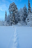Trail in the snow Royalty Free Stock Photo