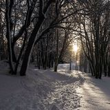 Trail through snow. Trail through the woods in snow Stock Photography