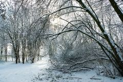 Trail through the snowy woodland royalty free stock photo
