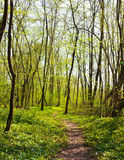 Trail in spring forest Stock Image