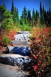 Trail stairs in fall colors, Mt. Rainier National Park Royalty Free Stock Photos