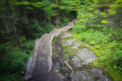 Trail with stairs leading into the forest Stock Photography