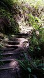 Trail Stairs. Stafford on a trail in Northern California Stock Images