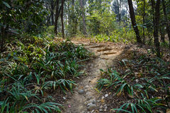 Trail and steps in hillside Royalty Free Stock Images