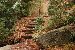 Trail Steps Stock Photography