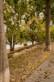 A trail and stone steps in the park. In autumn Royalty Free Stock Photography
