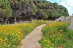 Trail on the summer meadow with yellow and red flowers. On bright sunny day Royalty Free Stock Photos