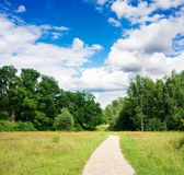 Trail in the summer the park royalty free stock image