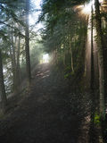 Trail with sun filtering through aspen trees Royalty Free Stock Photos