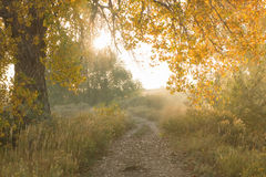 Trail into the Sunlight. A hiking trail leading into the sunlight in the fall season stock image