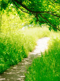 Trail in a Sunny Green Summer Forest Royalty Free Stock Image