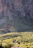 A Trail into the Superstition Mountain Wilderness Stock Images