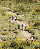 A Trail into the Superstition Mountain Wilderness. APACHE JUNCTION, ARIZONA - MARCH 15: Lost Dutchman State Park on March 15, 2015, near Apache Junction, Arizona Royalty Free Stock Photography