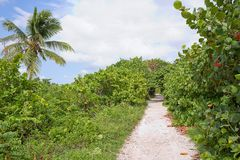 Trail Surrounded By Sea Grapes Trees At Bahia Honda State Park royalty free stock images