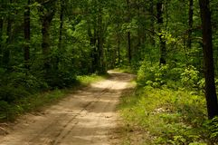 Trail surrounded by tall green trees Royalty Free Stock Photos