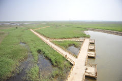 Trail on the swamp field. The swamp field, in Dongyin, where the yellow river meets the Bo Hai sea Shandong, China Stock Images