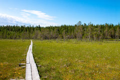 Trail through the swamp forest Royalty Free Stock Images