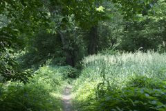 Trail by tall grass stock images