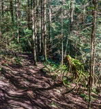 Trail through tall trees in a wet forest Cypress Falls Park British Columbia Canada Stock Photography