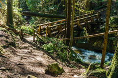 Trail through tall trees in a wet forest Cypress Falls Park British Columbia Canada. Wooden bridge and trail through tall trees in a wet forest Cypress Falls Royalty Free Stock Images