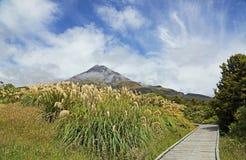 Trail in Taranaki NP Royalty Free Stock Images