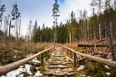 Trail in Tatra mountains Royalty Free Stock Image