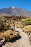 Trail to Mount Teide Stock Images