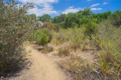 Free Trail Through Desert Brush Stock Images - 73022974