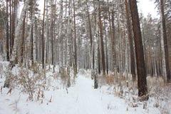 Trail till och med skogen Royaltyfri Foto