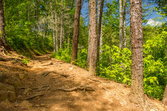 Trail to Abrams Falls Great Smoky Mountain National Park Royalty Free Stock Image