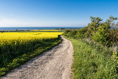 Trail to the Baltic Sea Royalty Free Stock Photography