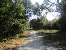 Trail to the Bay in Pensacola. A hidden gem, leading to a beautiful bayfront beach in Pensacola Stock Photo
