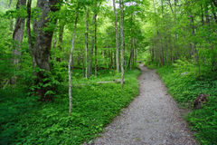 Trail to Chimney Tops. A hiking trail cuts through the wilderness as it heads toward Chimney Tops, Great Smokey Mountains National Park Royalty Free Stock Photos