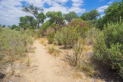 Trail to Desert Woods Royalty Free Stock Photography