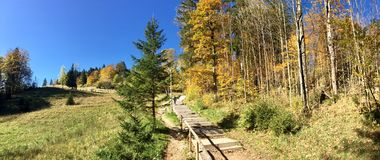 Trail to dry forest near the Lechfall, Germany. Landscape royalty free stock photo