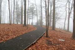 Trail to the Fog. A walking trail leads past tall trees into the fog. Brown leaves cover the ground Royalty Free Stock Photos