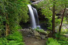 Trail to Grotto Falls. A hiking trail leads to Grotto Falls in Great Smokey Mountains National Park Stock Photography