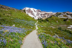 Trail to Mount Rainier stock images