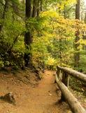 Trail to Salt Creek Falls Stock Photo