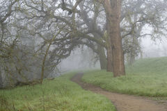 Trail to the unknown. A foggy trail in the woods of Northern California, in the winter, displaying leafless oak trees and green grass- uncertainty concept Royalty Free Stock Photos
