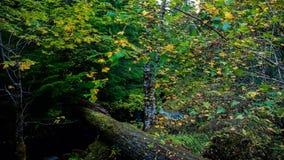Trail to Watson Falls royalty free stock photography