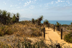 Trail in Torrey Pines Royalty Free Stock Photo