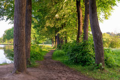 Trail between the trees leads to lake Royalty Free Stock Image